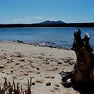 Stump on the beach at Fitsgerald River National Park. by myraj
