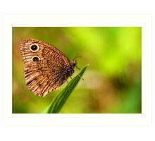 relaxing butterfly Art Print