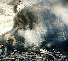 *Mrs. Pork Chops taking Life easy - Donegans Farm - Gordon Vic. Australia by EdsMum