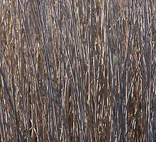 Reeds by Scott Dovey
