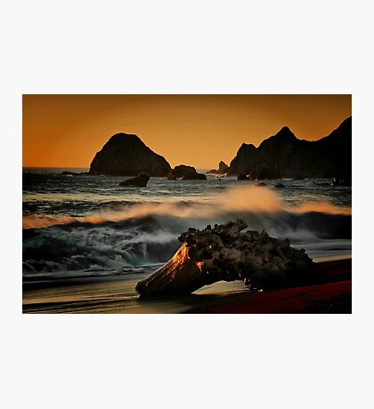 Driftwood on the Sand Photographic Print