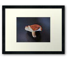 Lactarius Clarkae Framed Print