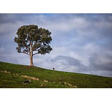A Tree and Goat Photographic Print