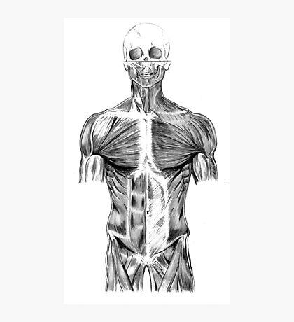 human body anatomy Photographic Print