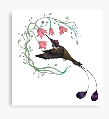 Hummingbird Coloured Version Canvas Print