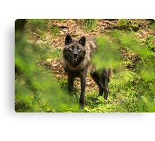 Black Wolf In Forest Canvas Print