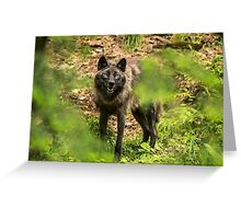 Black Wolf In Forest Greeting Card