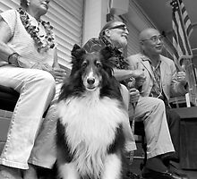 Dog on the campaign trail. by Alex Preiss