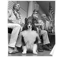 Dog on the campaign trail. Poster