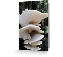 Australian Bio-luminescent fungi Greeting Card