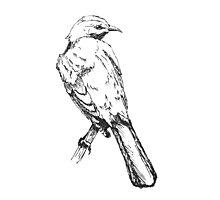 Mockingbird Photographic Print