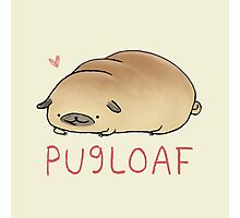 Pugloaf Photographic Print