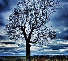The Tree by Vicki Field