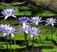 Water Lilies - Batavia Downs by Marilyn Harris