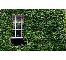 Window on leafy Cotswolds house facade, UK Photographic Print
