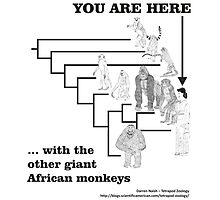 With the other giant African monkeys Photographic Print