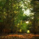 Forest Pathway by Vicki Field
