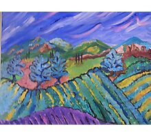 Vineyard Valley Photographic Print