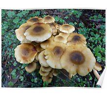 Fried egg fungi Poster