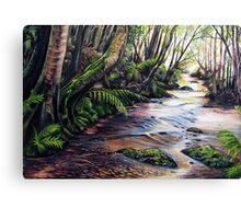 Along the Creek, Blue Mountains Canvas Print