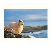 Donegal Sheep Art Print