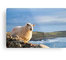 Donegal Sheep Metal Print