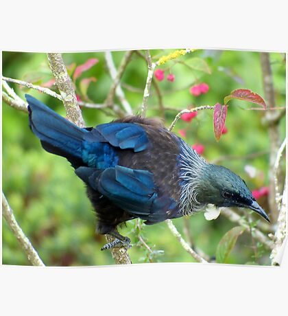 Hey...Where Is The Nectar Bowl - Tui - NZ Poster