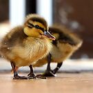 Boy... I Think I Ate Far Too Much... - Ducklings - NZ by AndreaEL