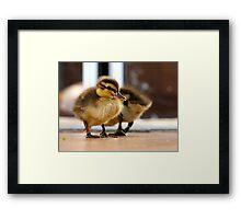 Boy... I Think I Ate Far Too Much... - Ducklings - NZ Framed Print