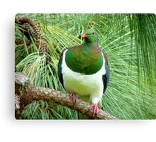 Did You Knock On My Wood? - Wood Pigeon - NZ Canvas Print