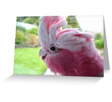 Yipeee! It's Going To Rain...Cockatoo - Rose Breasted/Galah - NZ Greeting Card