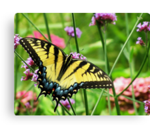 Yellow Tiger Swallowtail  Canvas Print