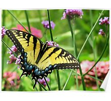 Yellow Tiger Swallowtail  Poster