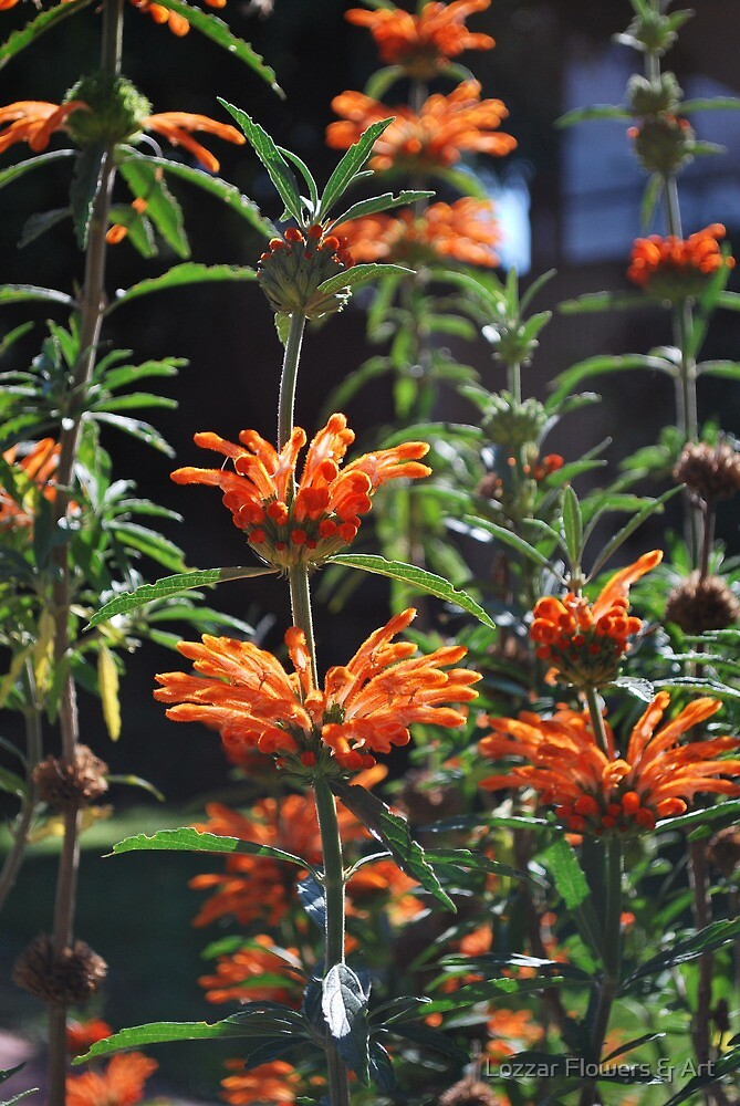Summer Bursts of Orange by Lozzar Flowers & Art