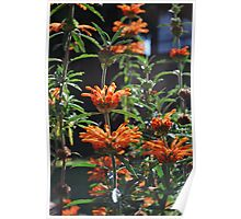 Summer Bursts of Orange Poster