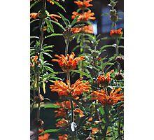 Summer Bursts of Orange Photographic Print