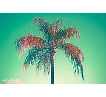 Red palm tree Photographic Print