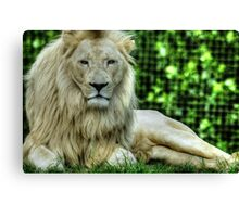 African White Lion Canvas Print