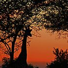 A Giraffe Sunrise by jozi1