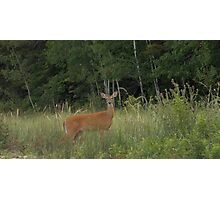 Doe Taking an Evening Stroll Photographic Print