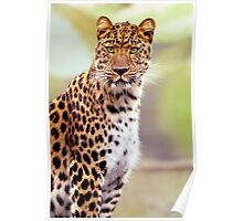 Leopard Photo Image Poster