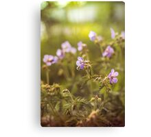 wild flowers in  light at sunset Canvas Print