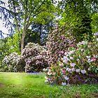 Springtime at Westonbirt by vivsworld