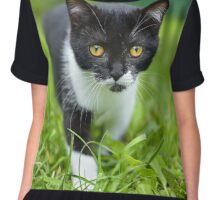 little black kitten in a grass Chiffon Top