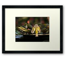 Let the light shine on me...........! Framed Print