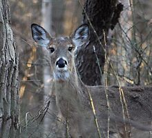 A Deer in the Thicket by Gilda Axelrod