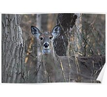 A Deer in the Thicket Poster