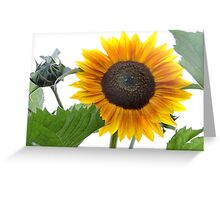 Dwarf Sunflower Greeting Card