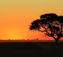 Sunset Gold - Nature Background - African Peace by LivingWild