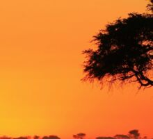 Sunset Gold - Nature Background - African Peace Sticker